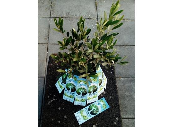 Dia da Árvore e hastear das bandeiras Eco Escolas